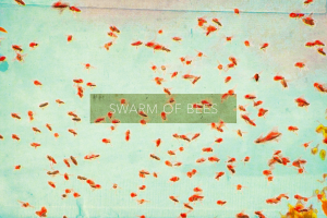 swarm of bees music band cover image